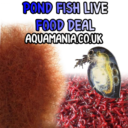 Pond Fish Live Foods Deal